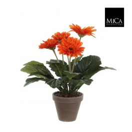 gerbera orange en pot stan jardinerie marius ferrat. Black Bedroom Furniture Sets. Home Design Ideas
