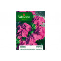 Geranium Eclat Rose Hybride F2 Vilmorin