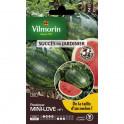 Pasteque Mini Love HF1 Vilmorin