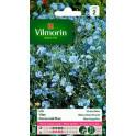 Lin Vivace Bleu Vilmorin