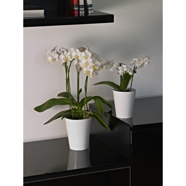Pot clivo orchidee 12 5 cm jardinerie marius ferrat for Animalerie aubagne