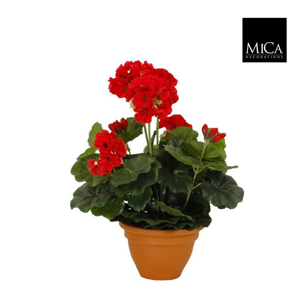 geranium rouge en pot campana jardinerie marius ferrat. Black Bedroom Furniture Sets. Home Design Ideas