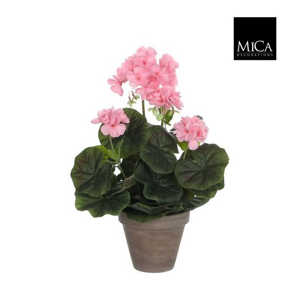 geranium rose en pot stan jardinerie marius ferrat. Black Bedroom Furniture Sets. Home Design Ideas