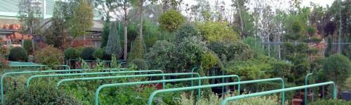 Plantes de pépinière