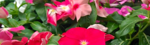 Fleurs printanières & estivales