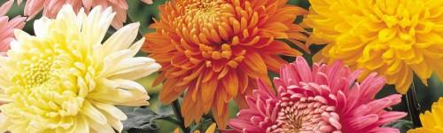 Fleurs automnales et hivernales