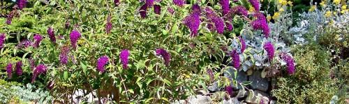 Arbustes à fleurs