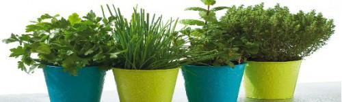 Aromatiques et légumes