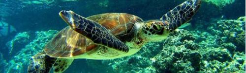 Reptiles et tortues