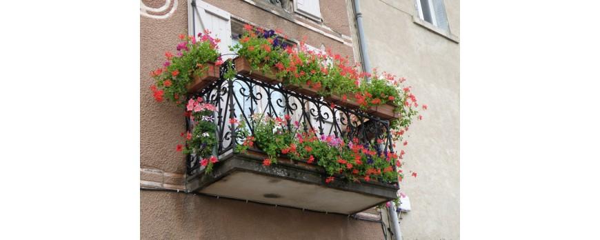 Entretien des fleurs de balcon