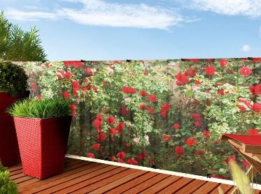 Plantes de p pini re jardinerie marius ferrat for Animalerie aubagne